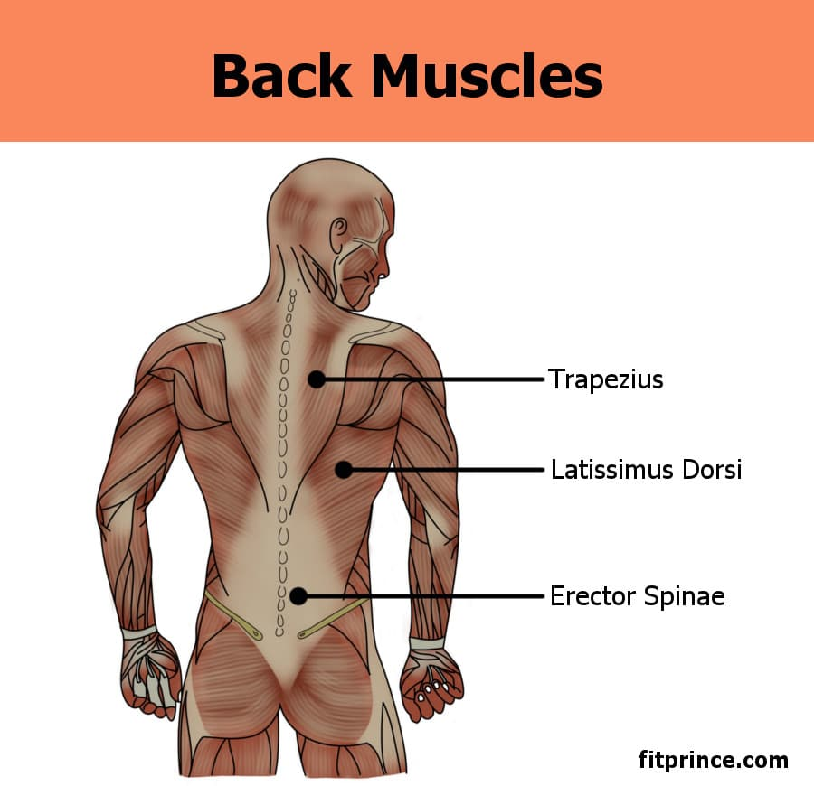 Build a Stronger Back - Fitprince