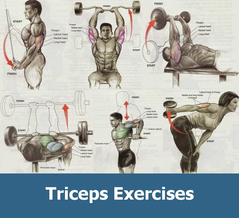 workout for triceps in gym