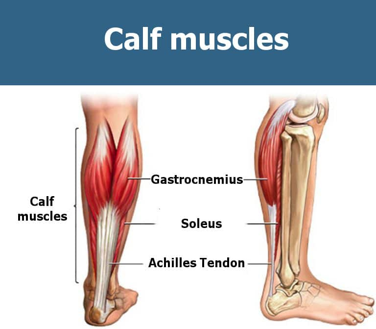 The Best Calf Workout For Mass Growing The Most Stubborn Muscle