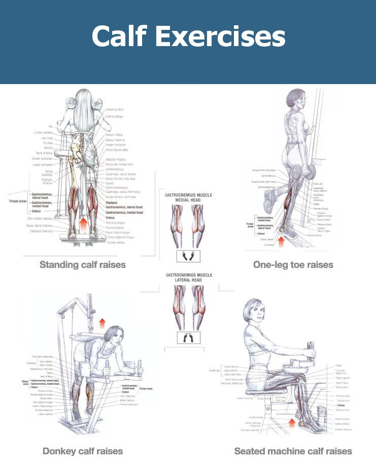Calf Strengthening Exercises | www.pixshark.com - Images ...