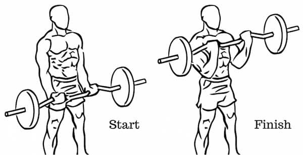 dumbbell curl diagram