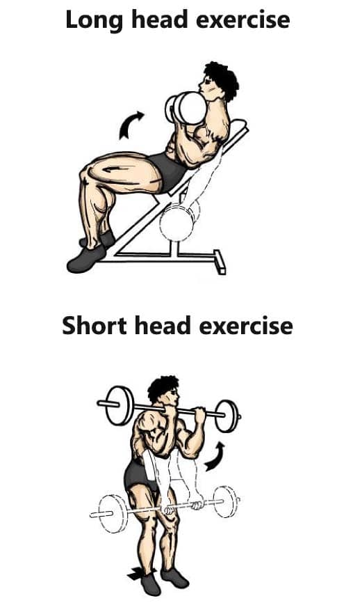 bicep long head and short head exercises