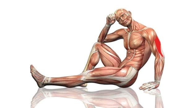 triceps lateral head exercise