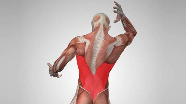 lat workout for mass