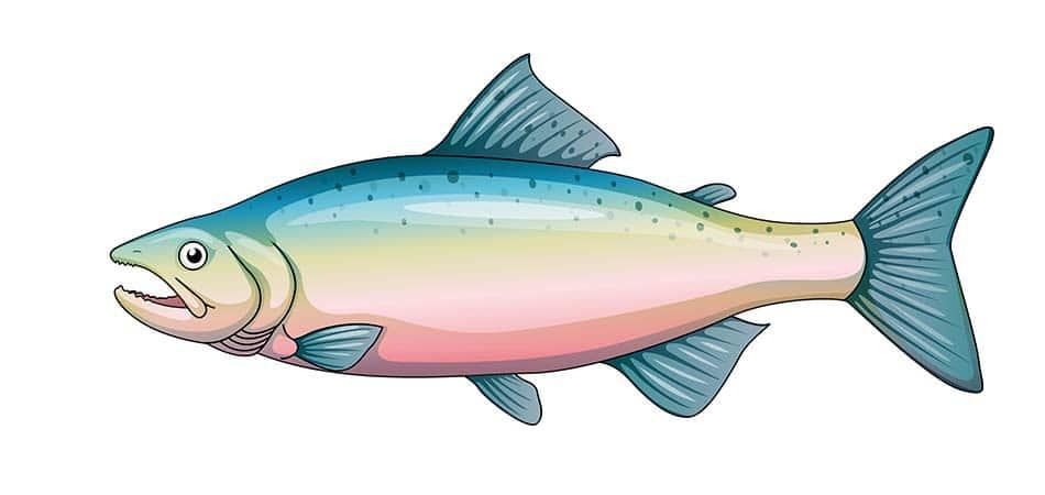 4 oz salmon protein
